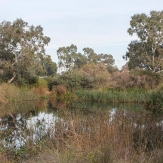 Edwardes Lake Wetland