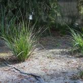 5562f-Wetland-PlantsWEB